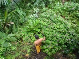 jungle machete